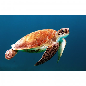 Do you have Turtle Syndrome?